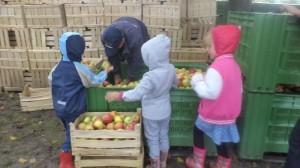 Sortiranje jabuka